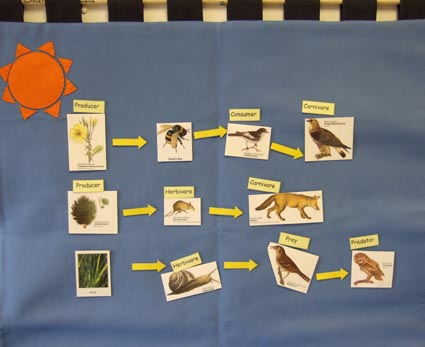 with Velcro pictures and labels to create food chains and webs.